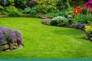 Pruning & Clean-Ups